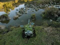 Plantas Nómadas