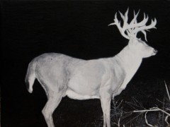 """spookspann‐trailcam"""