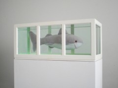 Shark (or About  the study of  leading roles), 2006.