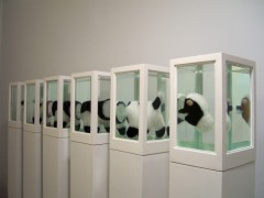 Six Little Cows (or About the study of leading roles ), 2008.