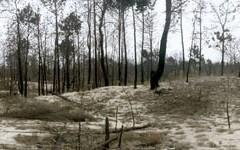 Serie Arboretum