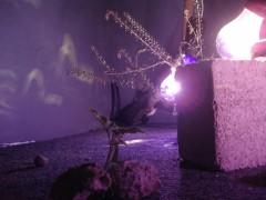 Exposición ae, 2008-2010