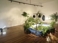 Backlight: la naturaleza como espectáculo