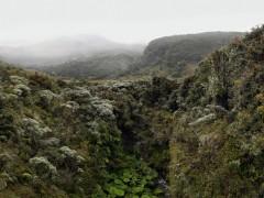 Bosque enano en el cauce de la Quebrada San Francisco, páramo del volcán Puracé
