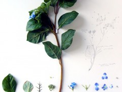 Herbarium of Artificial Plants