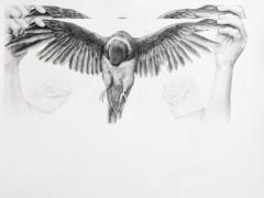 Untitled, (loro).