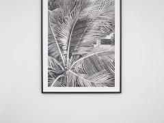 Sans titre (palmier).