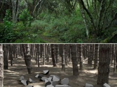 Outside the forest, 2013 (video)
