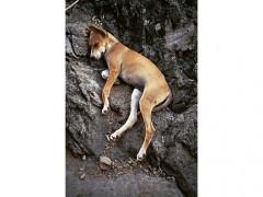 Sleeping Dog  | Perro durmiendo, 1990
