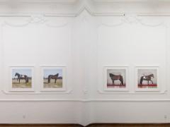 Linda Tegg - Vista de exposicion Coexistence