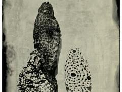 Impronta Series (2013)