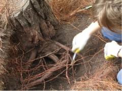 Ser raíz, Intervención in situ, excavación, 2007