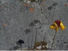Gnomon, intervención in situ, aguatinta sobre piedra 7 fotografías de 35 x  50 cm, 2013