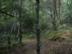 Theodor Kaczynski, connu sous le nom d'Unabomber, a vécu de 1971 à 1996 seul, dans une maison au milieu de la forêt. Ce qui pourrait être une simple reconstitution documentaire des lieux habités est problématisée ici par l'ajout d'une série de couches de sens volontairement « fausses », mais qui intriguent.