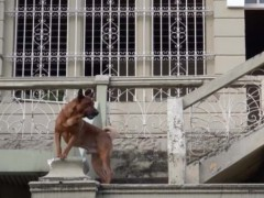 En l'absence de gargouille, il est bon d'avoir un chien pour faire fuir les « mauvais esprits » charriés par les transformations d'un quartier autrefois traditionnel.