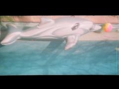 Les enfants rêvent de voir un dauphin à l'intérieur de leur piscine, mais à quoi rêve le dauphin gonflable en plastique qui a remplacé le rêve d'enfance?