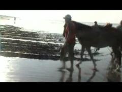 Il s'agit d'une performance présentée sous la forme d'une vidéo. Deux hommes et un cheval labourent le bord de mer tandis que leur travail est effacé inlassablement par l'environnement. Loop, le nom de cette pièce fait référence aux projections de l'art vidéo et à la vie elle-même: répétition constante, c'est une sorte de Sisyphe sans métaphore. L'humain, que dire de plus.