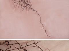 Untitled Stitching