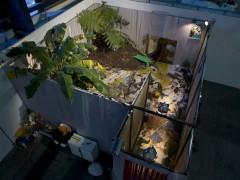 Patio o pintura para piso y plantas. Arteba, Petrobras, 2007  (primer premio)