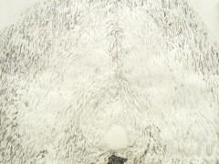 Landscape as an entity, 2005