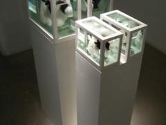 Vaca y Ternero (o Acerca del Estudio de los Protagonistas…), 2007.