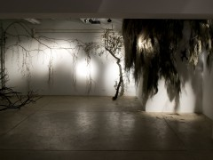 Sombra de toro, 2009