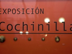 "Exhibition ""Cochinilla"""