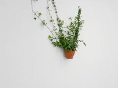 Serie : Naturaleza ( DNSEP)