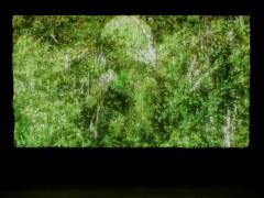 Amoahiki, Árvores do canto xamânico, 2008