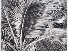 Sans titre (palmier). Detail