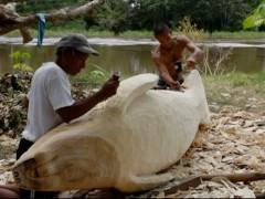 A Tarapoto, un manatí, 2011