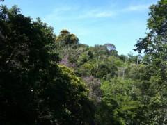 Pensamento Tropical