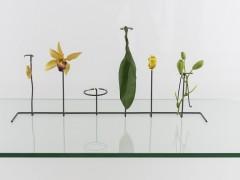 Alberto Baraya. Expedition Berlín, Herbarium of Artificial Plants, 2013–ongoing.