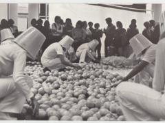 Arte Agrícola en Acción - Toronjas
