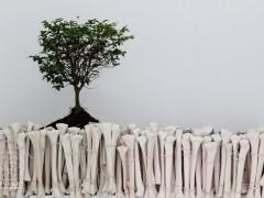 Carbono 14 - Rafael Gomez Barros - Vida No Orgánica  -cerámica, tierra negra, bonsai y madera 2015