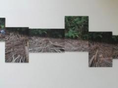 Ser creciente, Intervención in situ, madera 6 Fotografías cada una de 100 x 70 cm.  composición total de 510 x 150 c.m, 2009