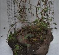 Semillas de escultura, Tierra aglomerada,  varias especies de  enredaderas andinas, estructura colgante en malla plástica y cable de acero.  dimensiones muy variables, peso promedio 30K, 2013